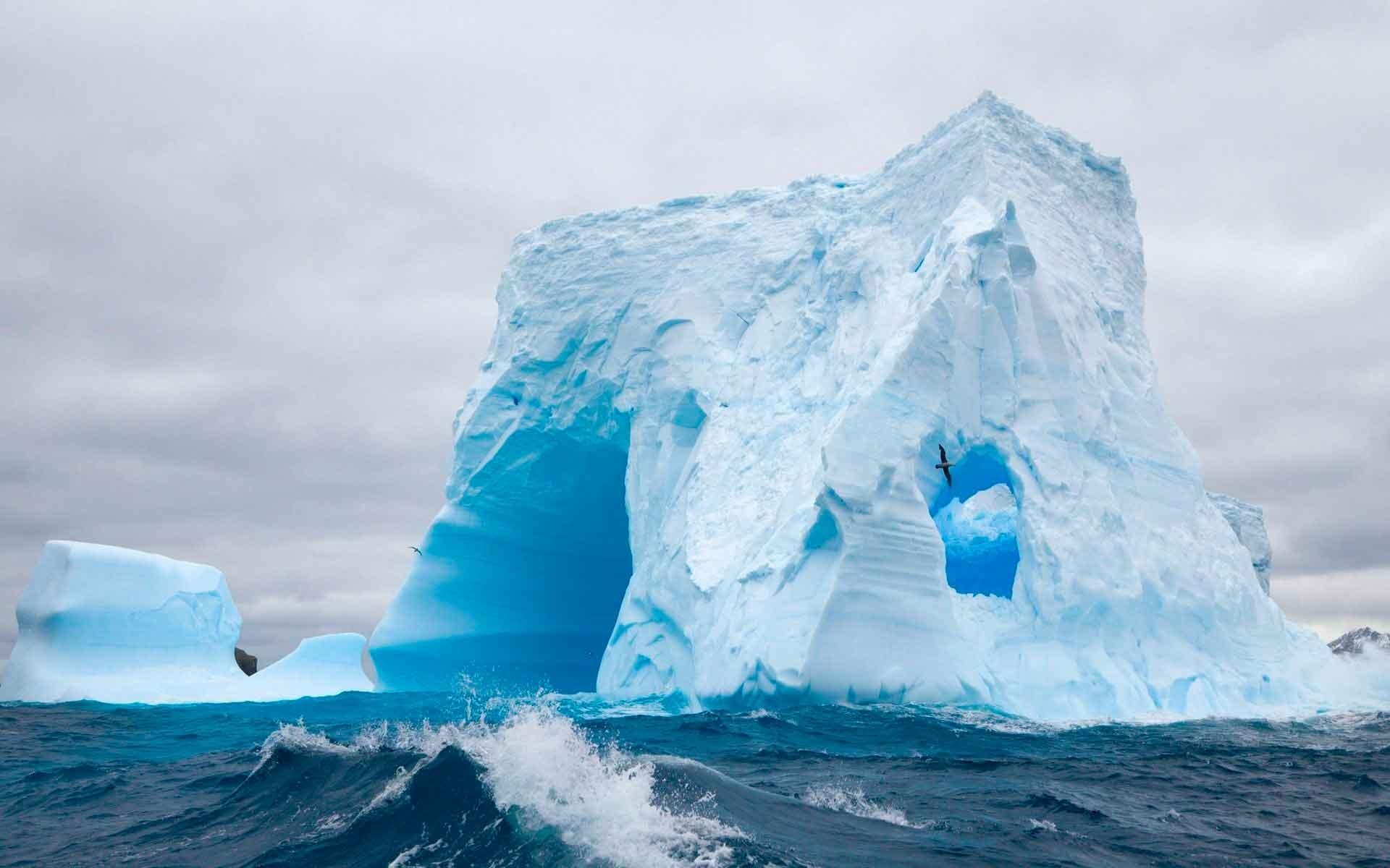 Северный и южный синий кит обитает в холодных водах