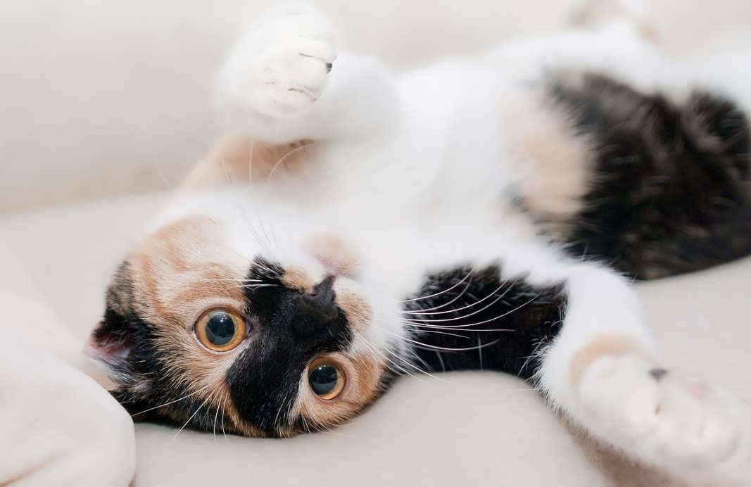 Как удалить запах кошачий мочи с дивана