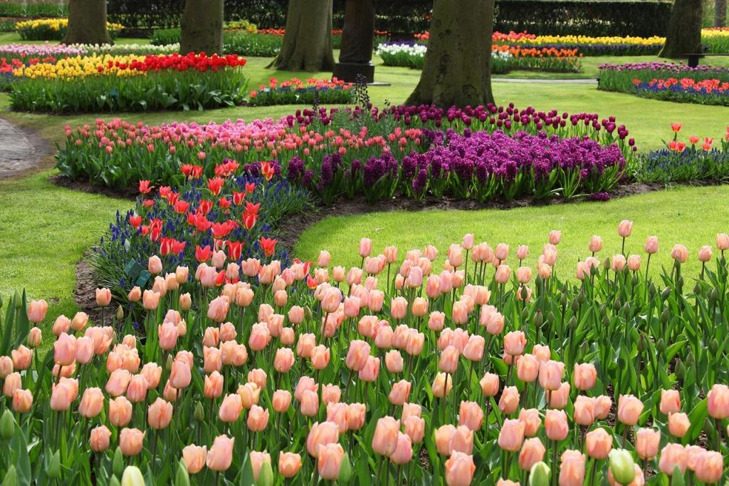 Особенности посадки тюльпанов осенью