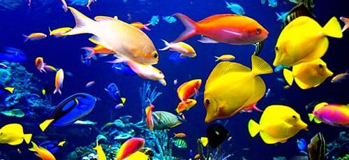 Приснились красивые рыбки