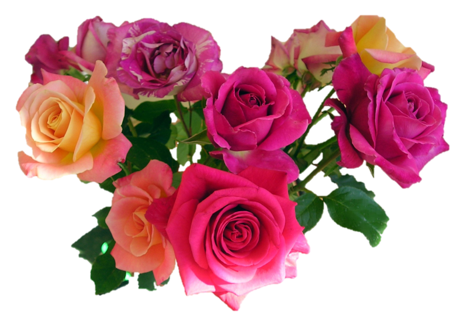 Images of pink roses bouquet