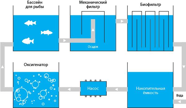Разведение рыбы в узв своими руками