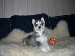 Как правильно играть с щенком