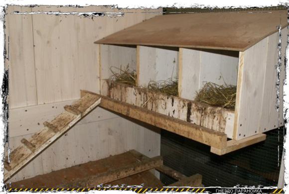 Куриные гнезда с крышей