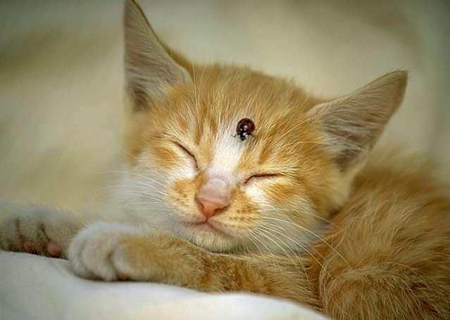 Как вывести запах кошачьей мочи лимоном