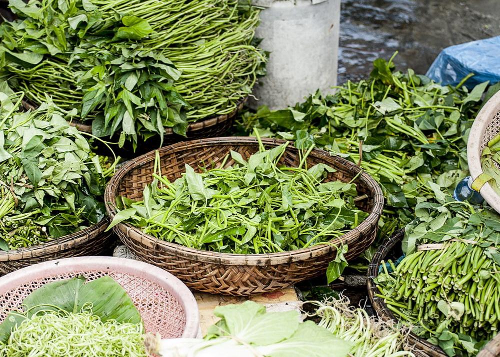 Выращивание зелени круглый год как бизнес