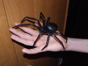 Пауки виды в квартире