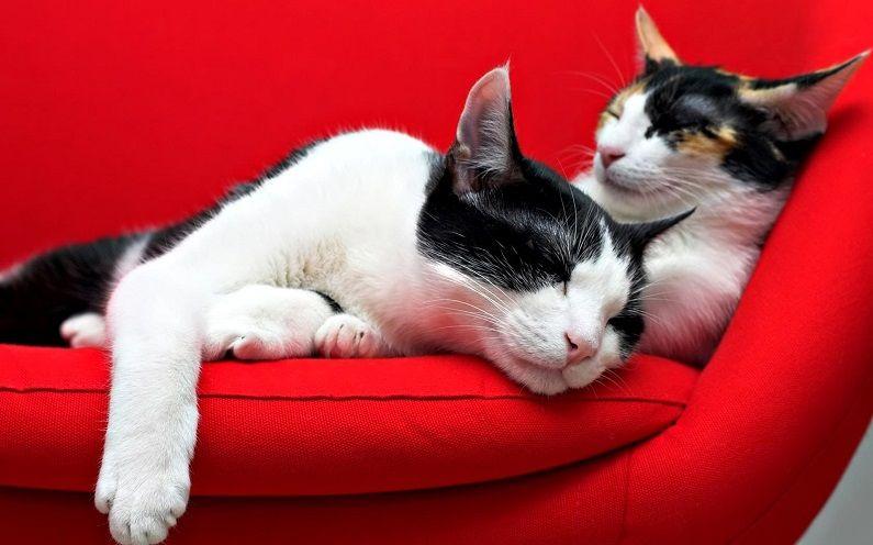 Как удалить с мягкой мебели кошачью мочу