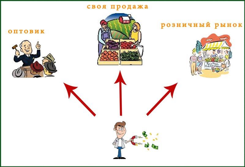 Спрос на лук зеленый