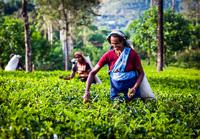 The Ethical Tea Partnership