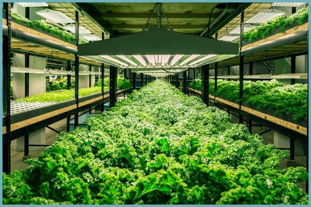 Как выращивать зелень в теплице