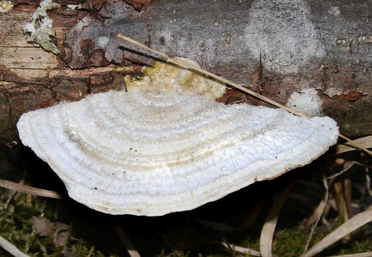 Групповушка русская смотреть