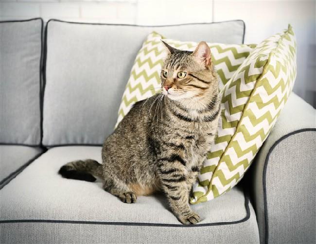 Как избавиться от запаха от кошачьей мочи