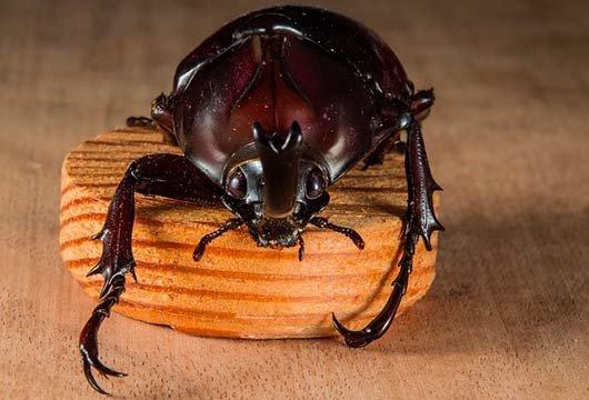 К чему снятся черные жуки дома
