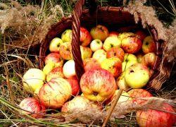 История праздника яблочный спас