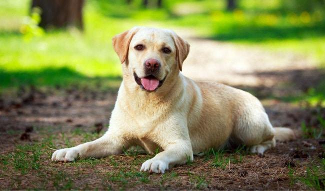 Самые дружелюбные породы собак для собак
