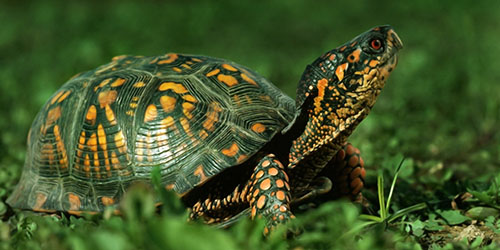 Во сне черепаха