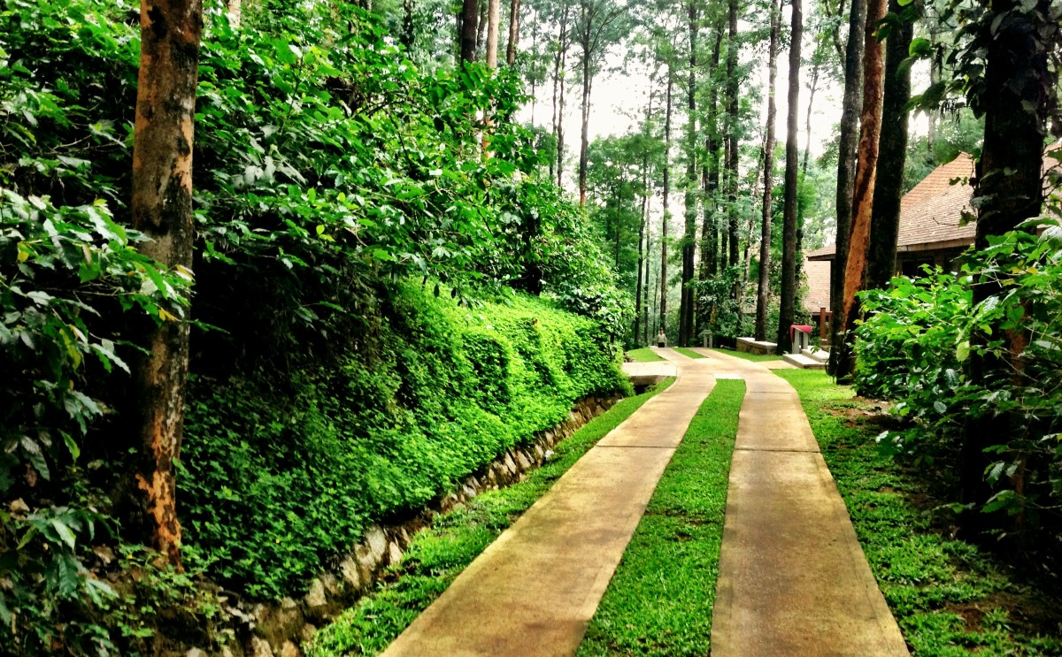 Coorg path