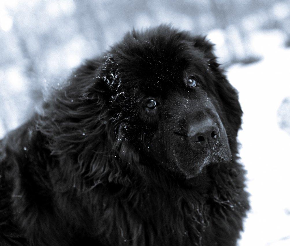 Дружелюбные породы собак