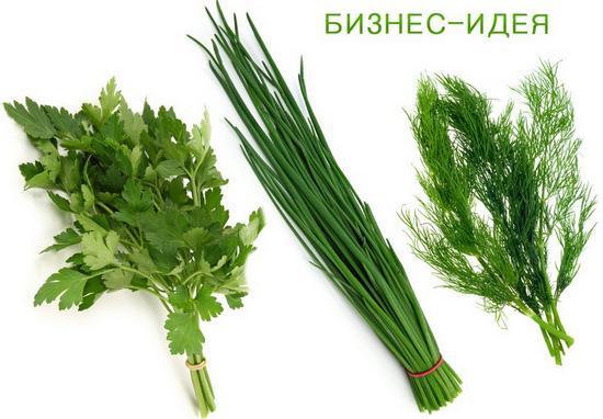 Зелень на продажу как выращивать