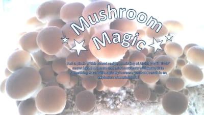 mushroom magic growing supplement