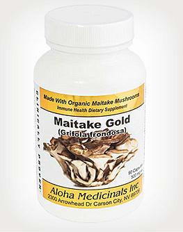 Maitake - Grifola frondosa mushroom