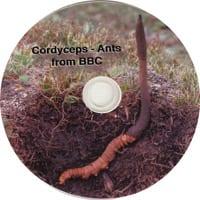 Cordyceps – Ants BBC Documentary
