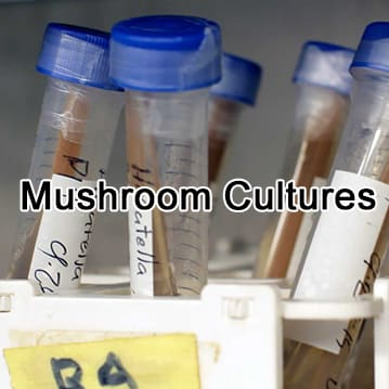 Mushroom Cultures