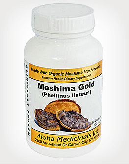 Meshima Phellinus linteus mushroom