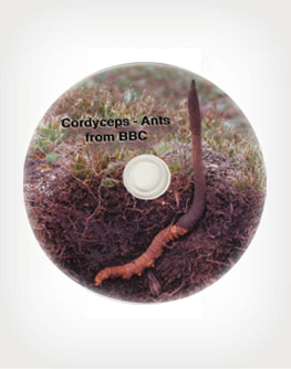 Cordyceps Ants BBC Documentary