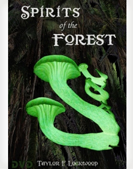 Spirits of the Forest by Taylor F. Lockwood