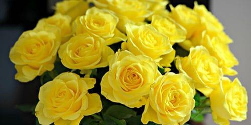 Желтые розы приснились