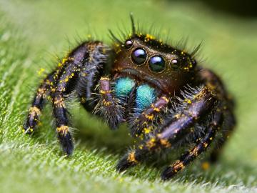 В квартире паук огромный