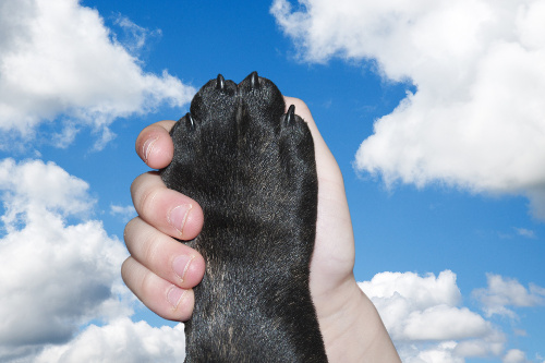 Puppies nails