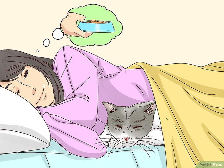 Почему кошка не спит со мной