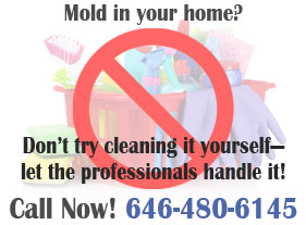 mold in your home graphic