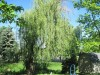 Castleton Area, indianapolis, In. Weeping willow tree removal and Stump Grinding
