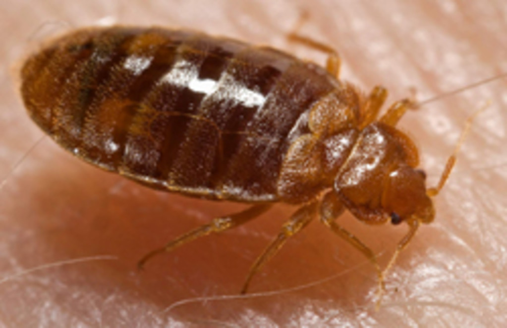 Pest Arrest Inc. -Professional Bed Bug Treatment