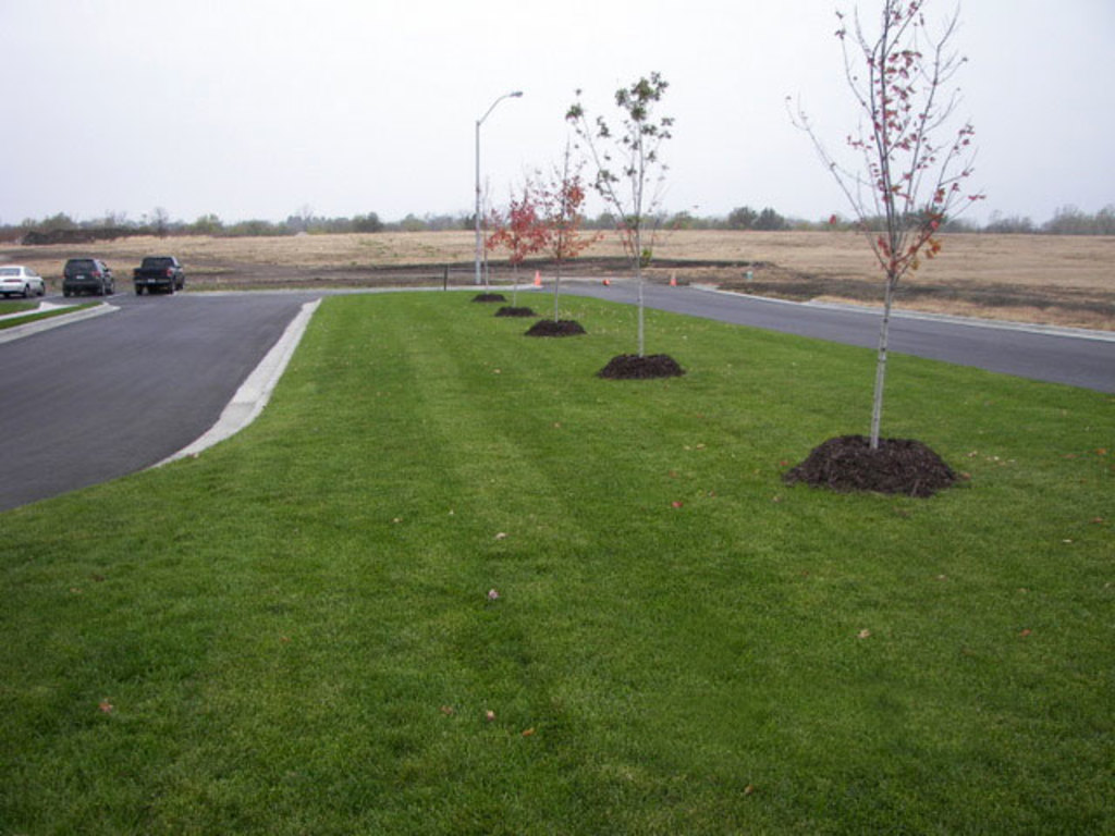 Landscaping Services Landscape Design Lawn Care Service Tree