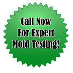 Eco Safe Mold Removal