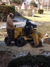 Fred & Sons - Stump Grinding