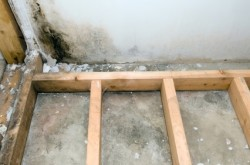 DEM Services - Basement Mold