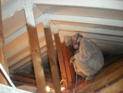 KEM Environmental Solutions- Attic Mold Remediation