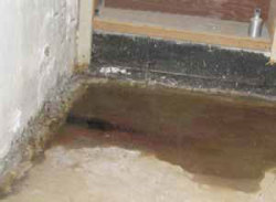 Tri State Mold Solutions- Water in Basement