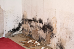 Discount Water Extraction - Mold On Wall In Home