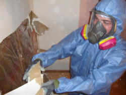 Custom Craft Environmental - Mold Removal