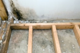 Tri State Mold Solutions- Mold