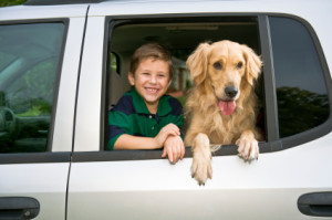 All County Window Tinting - Boy and Dog looking out window
