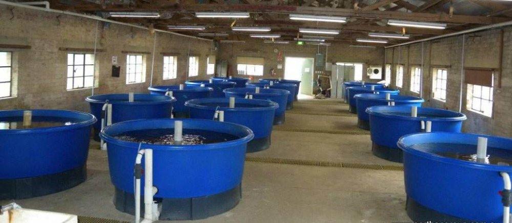 Ферма рыб
