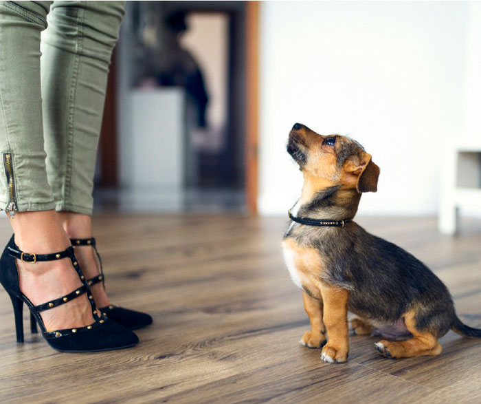 How to protect wood floors from dog nails